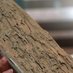 Egurerrezko egitura duten zenbait etxebizitzetan termitak azaldu direla jakinarazi du Udalak