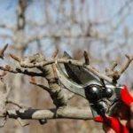 Fruta-arbolen kimaketa ikastaroa antolatu du Kimu Batek